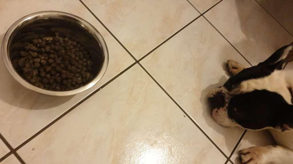 Inappetenza del cane - influenza gastrointestinale