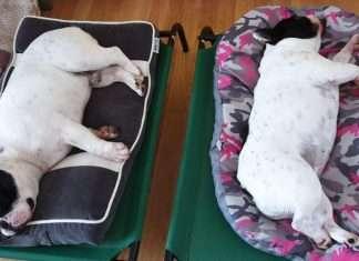 L'Influenza intestinale del cane. Sintomi e cure. La nostra esperienza
