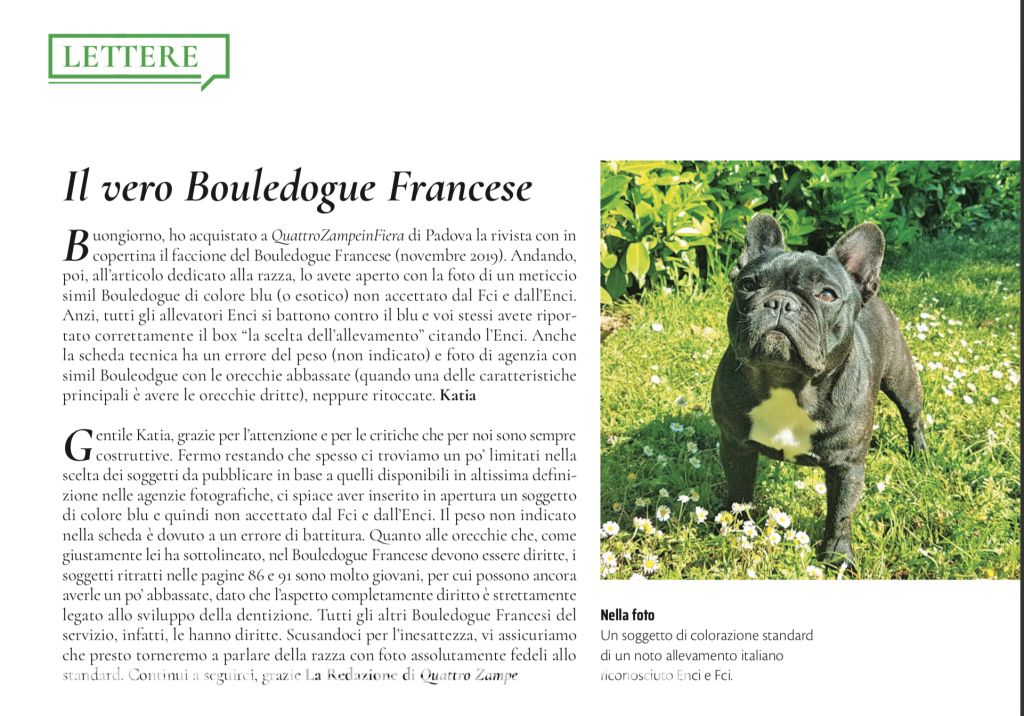 Cos'è Find the Frenchie - Blog sul Bouledogue Francese