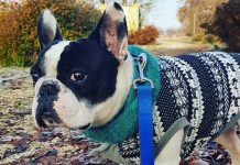 Scaldacollo per Cane - Dante - Findthefrenchie