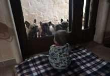Bambini e Cani. Intervista a Giulia dell'Allevamento Dei Bulli Invincibili