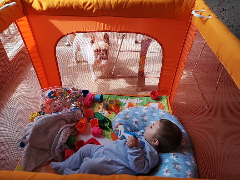 Bambini e Bouledogue