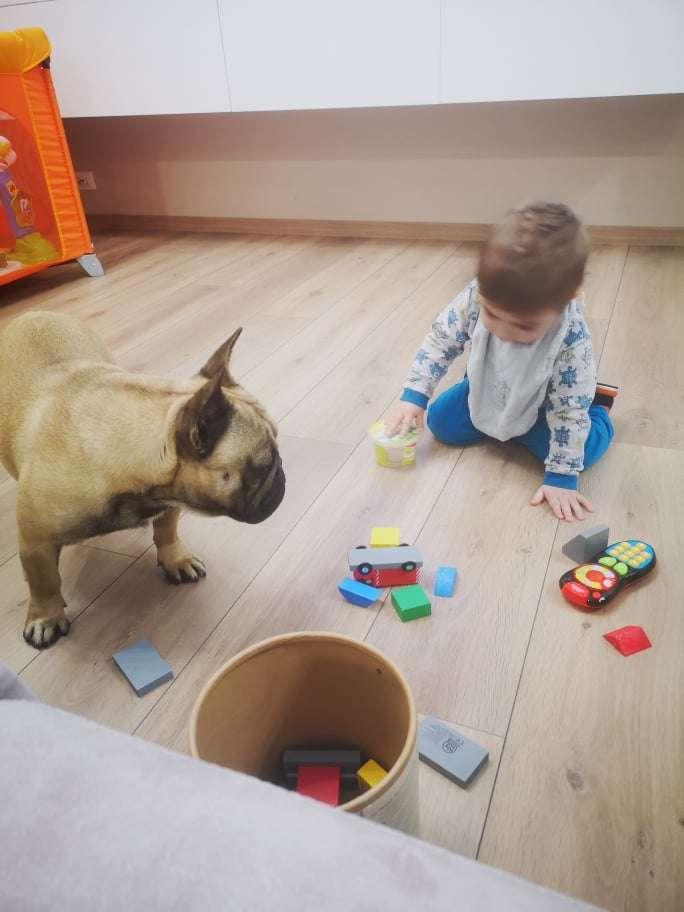 Bambino e Bouledogue