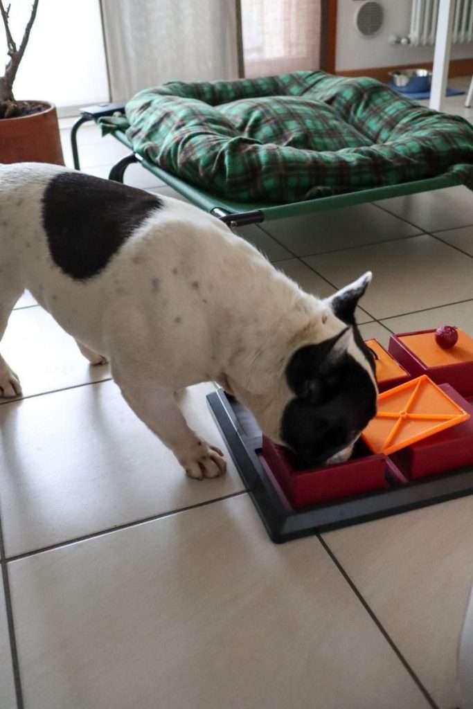 Dante gioca in casa - Find the Frenchie Blog