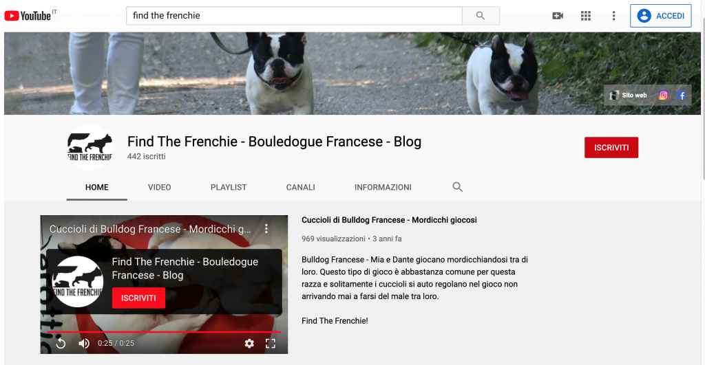 Video Bouledogue Francese Canale Find the Frenchie