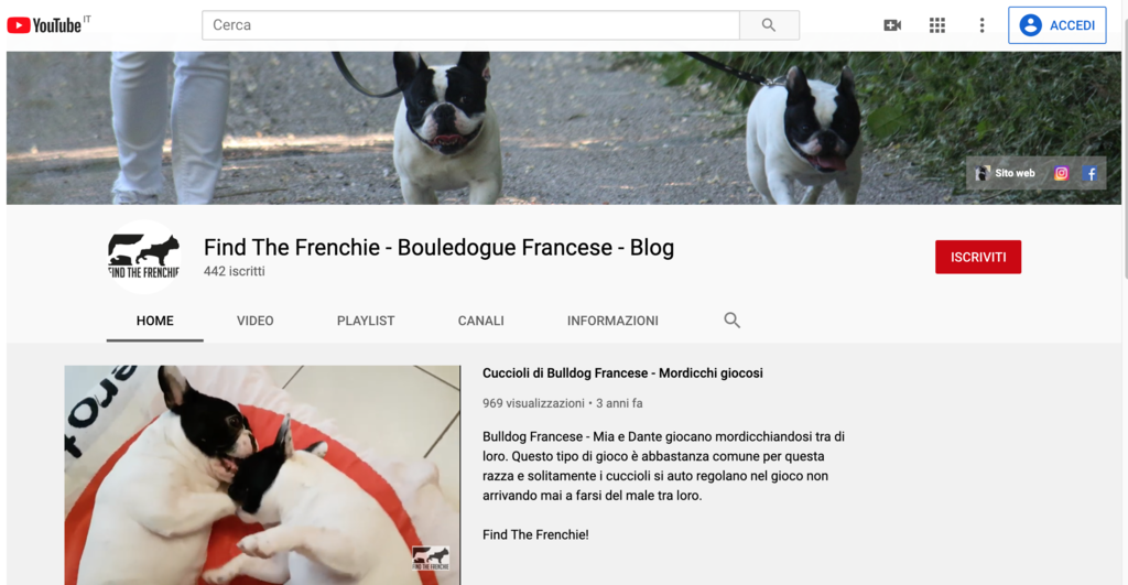 Video Bouledogue Francese Canale YouTube Find the Frenchie