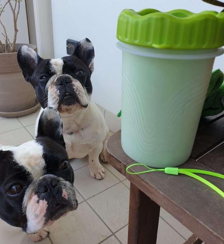 Dante e Mia guardano incuriositi il lava zampe per cani