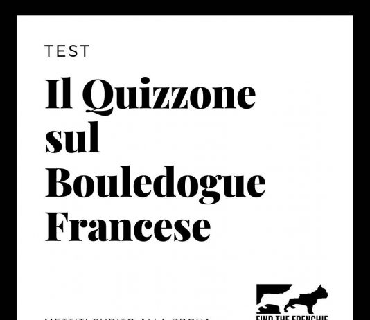 Quizzone Bouledogue Francese - Find the Frenchie