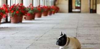 Mia a Villa Emo dell'architetto Andrea Palladio. La villa si trova Fanzolo di Vedelago, in provincia di Treviso.