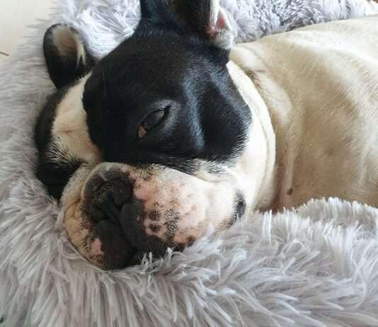 Dante dorme sulla cuccia relax per cani
