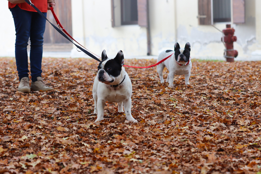 La passeggiata del cane. Dante e Mia osservano il paesaggio nuovo.