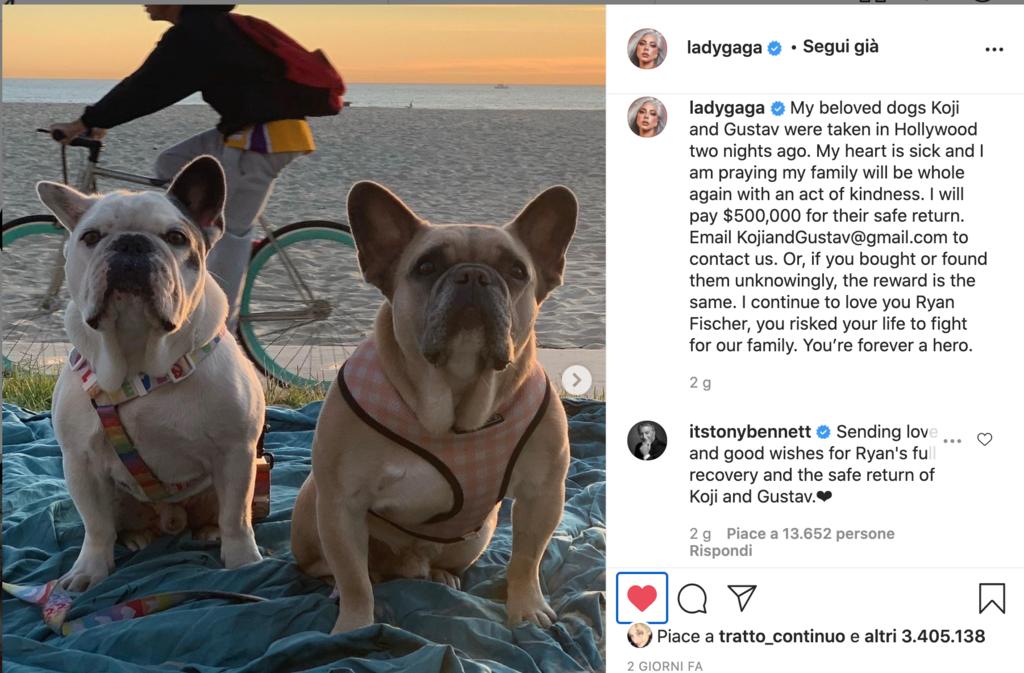 Bulldog Francesi di Lady Gaga - Il Post di Instagram con la richiesta di restituirli e la ricompensa di 500.000