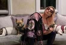 Lady Gaga con i suoi bulldog francesi (Instagram)