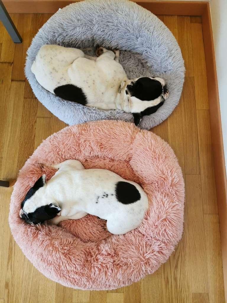 Cuccia relax morbida e avvolgente per il riposo del cane