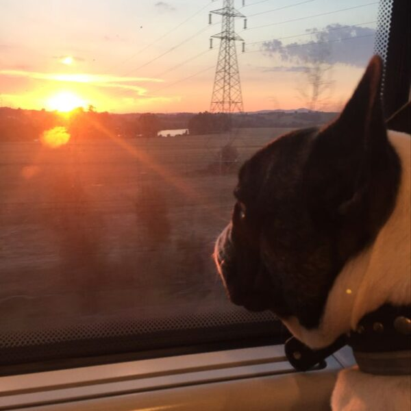 In treno con il cane. Francois guarda fuori dal finestrino