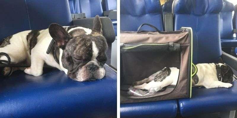 In treno con il cane. Francois pendolare